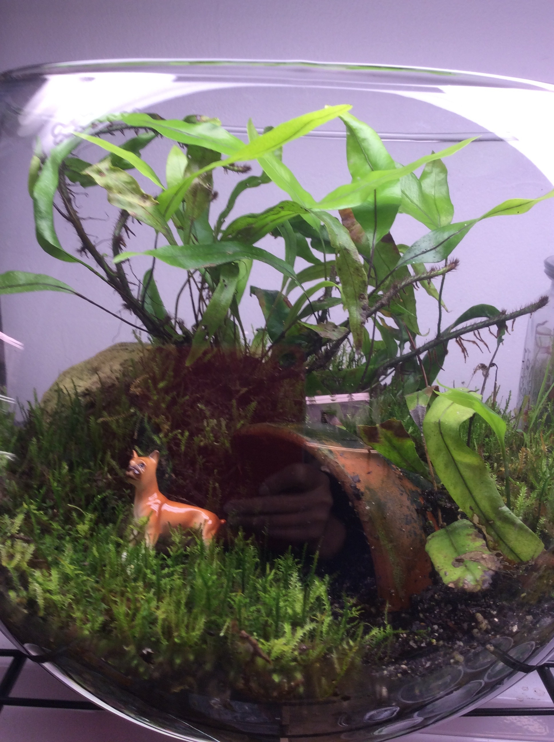 Terrarium Building Workshop June 2- Sign Up NOW