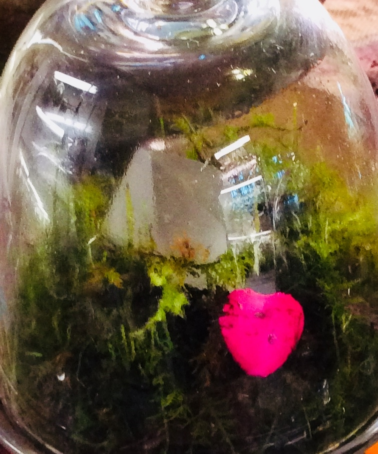 Terrariums Show Your Love for Years, and No Calories!
